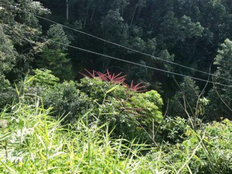 2018ハワイ ハワイ島 ツアー ワイピオ渓谷