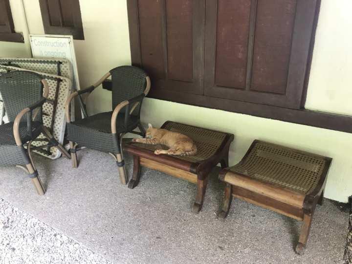 2017cebu_オスロブ 更衣室の前 ネコ