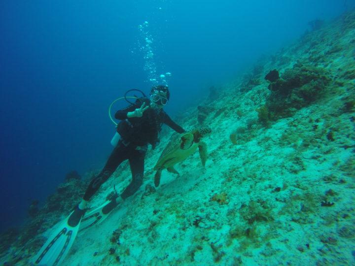 2017cebu_スミロンブルーォーター ダイビング ウミガメ2