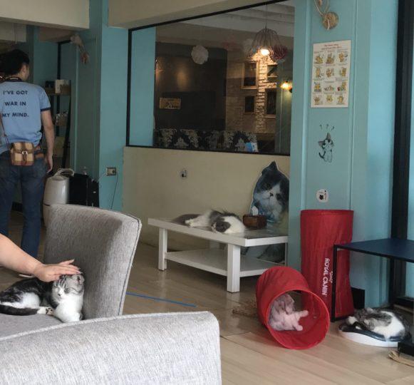 2018PKT プーケットタウン 猫カフェ