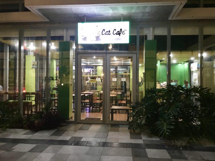 2018cebu_SMシーサイド 猫カフェ cat cafe