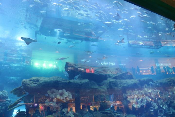 2017UAEドバイ ドバイモール 水族館