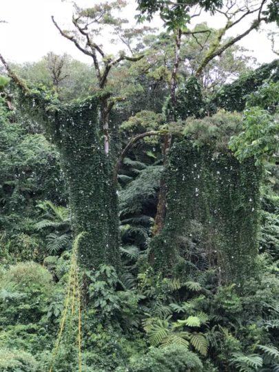 2018ハワイ ハワイ島 ツアー アカカ滝