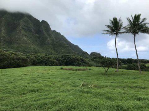 2018ハワイ ホノルル クアロアランチ